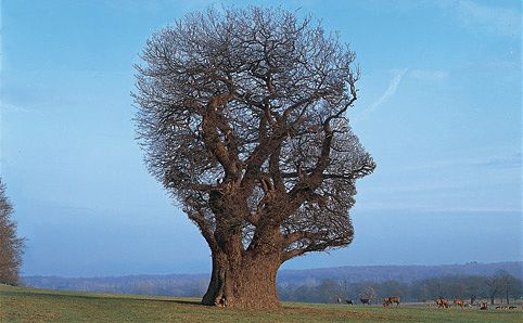 tree-of-half-life-cmyk-10mb-482x298